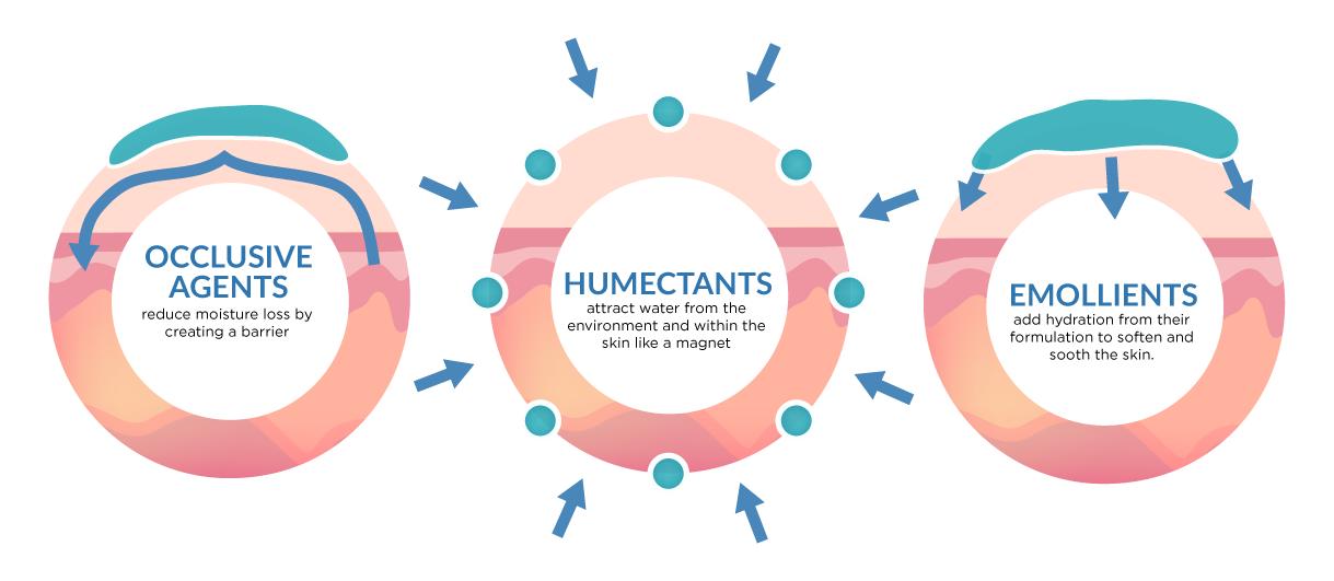 Cấp ẩm, khoá ẩm và dưỡng ẩm khác nhau như thế nào?