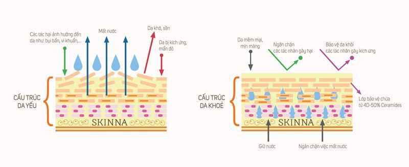 Trở ngại của mỹ phẩm trong con đường thẩm thấu vào da.